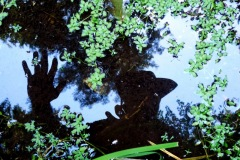 09_15_15-autoportret-piaszczysta-sandberg-ważka-dragonfly-4-001