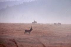 09_16_16-darek-rozdroże-stanisław-hala-izerska-jelenie-rykowisko-izery-20-003