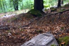 09_16_20-mnisi-las-górzyniec-monchewald-mała-kamienna-wysoki-grzbiet-hoher-kamm-hartenberg-4